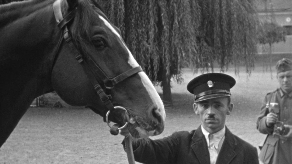 Horses of the Cavalry Captain